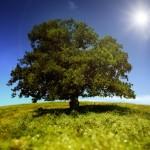 iStock_tree_sun_shining