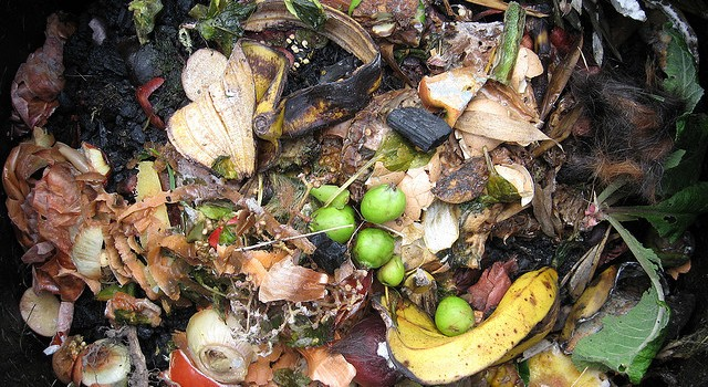 Beginners Guide to Home Composting