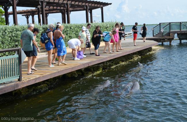 Princess Cruises Caribbean Princess Grand Cayman Excursion Dolphins